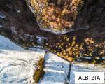 ALBIZIA anagram