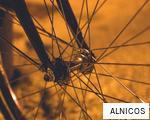 ALNICOS anagram