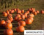 AMMONIATES anagram