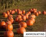 AMMONIATING anagram