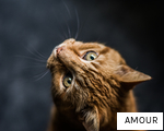 AMOUR anagram