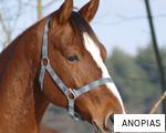 ANOPIAS anagram