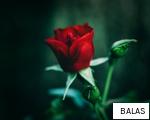 BALAS anagram