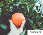 BIGARADE anagram