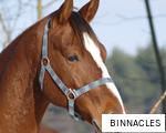 BINNACLES anagram