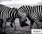 BLACK anagram