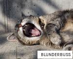 BLUNDERBUSS anagram