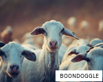 BOONDOGGLE anagram