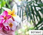 BOTANIC anagram