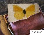 CASSINO anagram