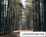 CATEGORIZATION anagram