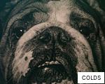 COLDS anagram