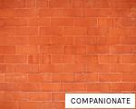 COMPANIONATE anagram