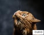 CURIO anagram