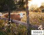 DOGIES anagram