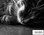 DOZES anagram