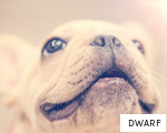 DWARF anagram
