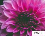 FAMULI anagram