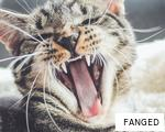 FANGED anagram