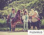 FILOVIRUS anagram