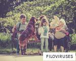 FILOVIRUSES anagram