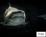 FISH anagram
