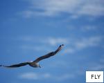FLY anagram