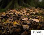 FUNGAL anagram