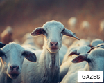GAZES anagram