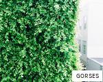 GORSES anagram