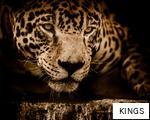KINGS anagram