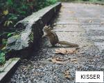 KISSER anagram