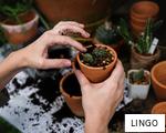 LINGO anagram