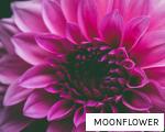 MOONFLOWER anagram