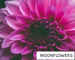 MOONFLOWERS anagram