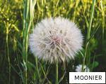 MOONIER anagram