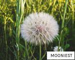 MOONIEST anagram