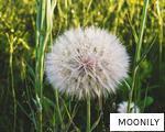 MOONILY anagram
