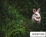 NIDATION anagram