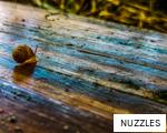 NUZZLES anagram
