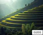 OLEOS anagram