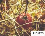 RICKETS anagram