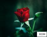 ROM anagram