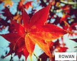 ROWAN anagram
