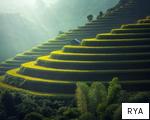 RYA anagram