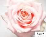 SAHIB anagram