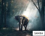 SAMBA anagram