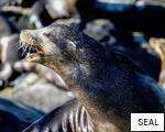 SEAL anagram