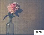 SHAD anagram