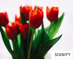 SIGNIFY anagram